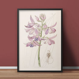 """Calanthe Orchidee"" - A4 - digitaler Download"